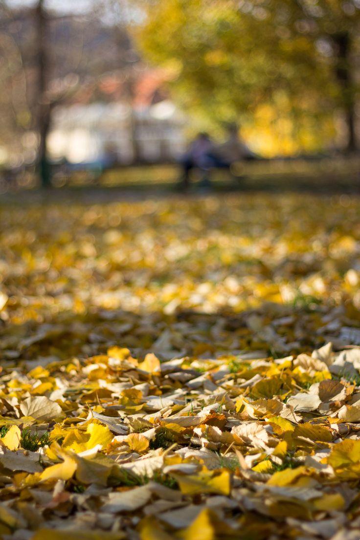 Autumn in Prague - null