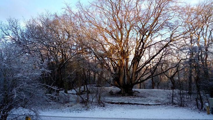 #winter #snow #geversduin