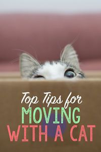 Moving to a new home can be very exciting - but also very stressful. While planning a big move, it's easy to forget just how much our cats can be affected, too. They can get nervous and anxious during...