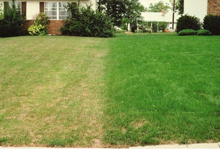 2kg extreme shade drought resistant lawn seed with