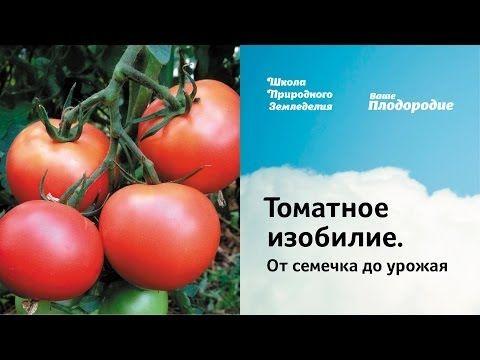 Томатное изобилие. От семечка до урожая.. Обсуждение на LiveInternet - Российский Сервис Онлайн-Дневников