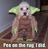 Yes its me, your funny dog. Sorry about the carpet.