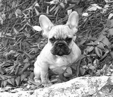 Шампунь-кондиционер для собак Animology