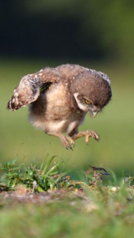 Jump! Jump! Aha!