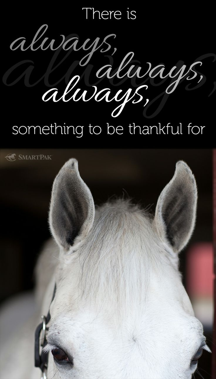 Pics photos quote i wrote for my horse com account s equestrian - Find This Pin And More On Horse Quotes And Jokes