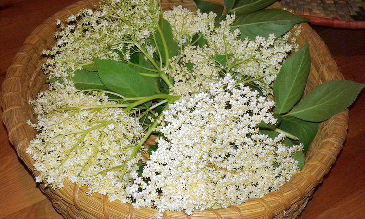 Raccolta di #Fiori di Sambuco da fare sott'olio. I fiori vanno lavati, fatti asciugare molto bene, poi sgranati.  In un vaso di vetro sterilizzato procedere a formare uno strato di fiori ed un velo di sale fino all'orlo, infine ricoprire con Olio extra vergine d'oliva. Sigillare i vasetti e conservare in un luogo fresco ed asciutto. Ricetta calabrese. Con questa conserva si farà la famosa Focaccia al Sambuco... ma questa è un'altra storia...