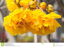 Image result for silk with cotton