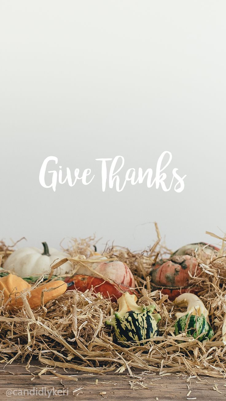 Give Thanks Thanksgiving gords pumpkins set up background wallpaper you can download for free on the blog! For any device; mobile, desktop, iphone, android!