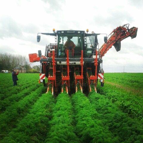 Dewulf ZKIV harvesting carrots #loonwerker #landbouw #agriculture #dewulf #nofarmersnofood