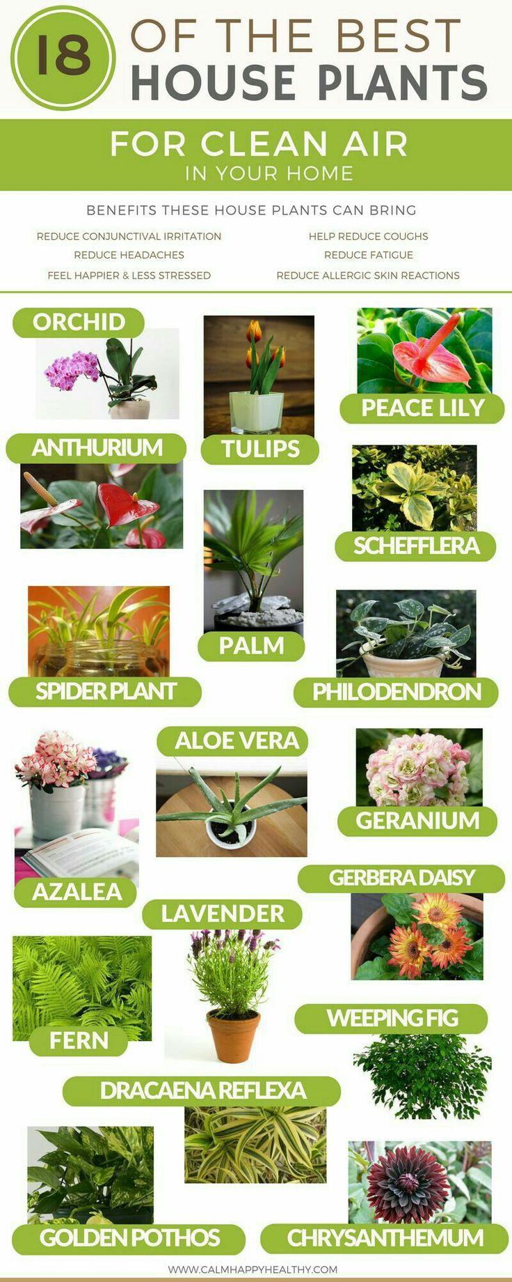 425 Best Gardening Images On Pinterest Gardening