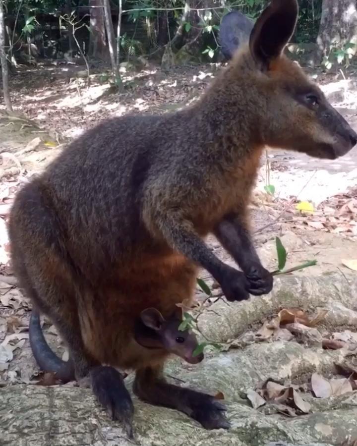 Pin on Marsupials