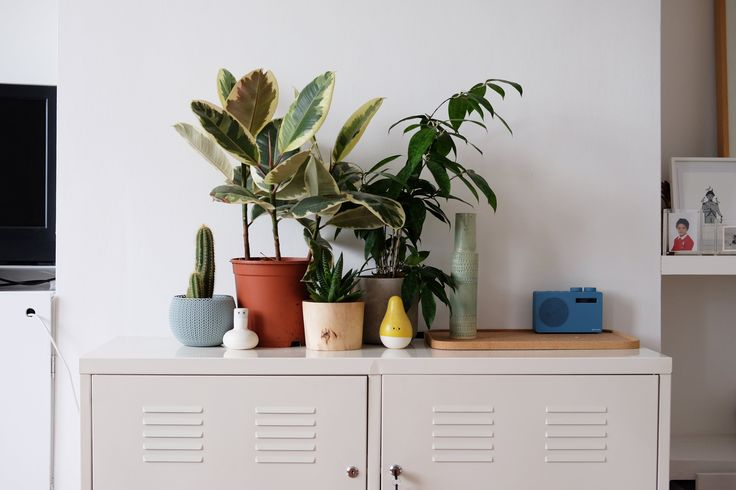 Pui is the founder of lifestyle brand Scout Editions. What started off as selling cards and paper goods in its early days has now evolved into its own line of homewares like tea towels, trays, cushion covers and coasters.