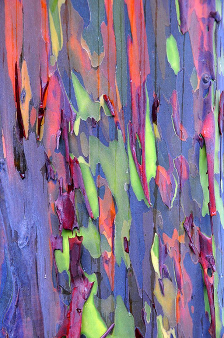 ^ 1000+ ideas about ucalyptus rbre on Pinterest Fougère ...