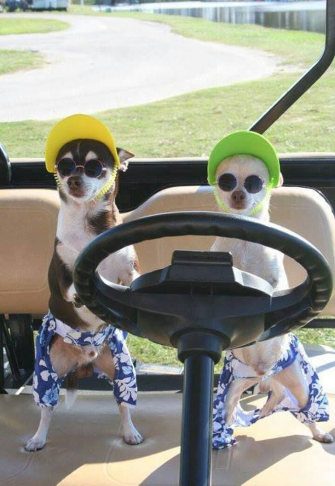 Golf? They look as if they're on a mission. Lol Seems like me and you ! TODAY!
