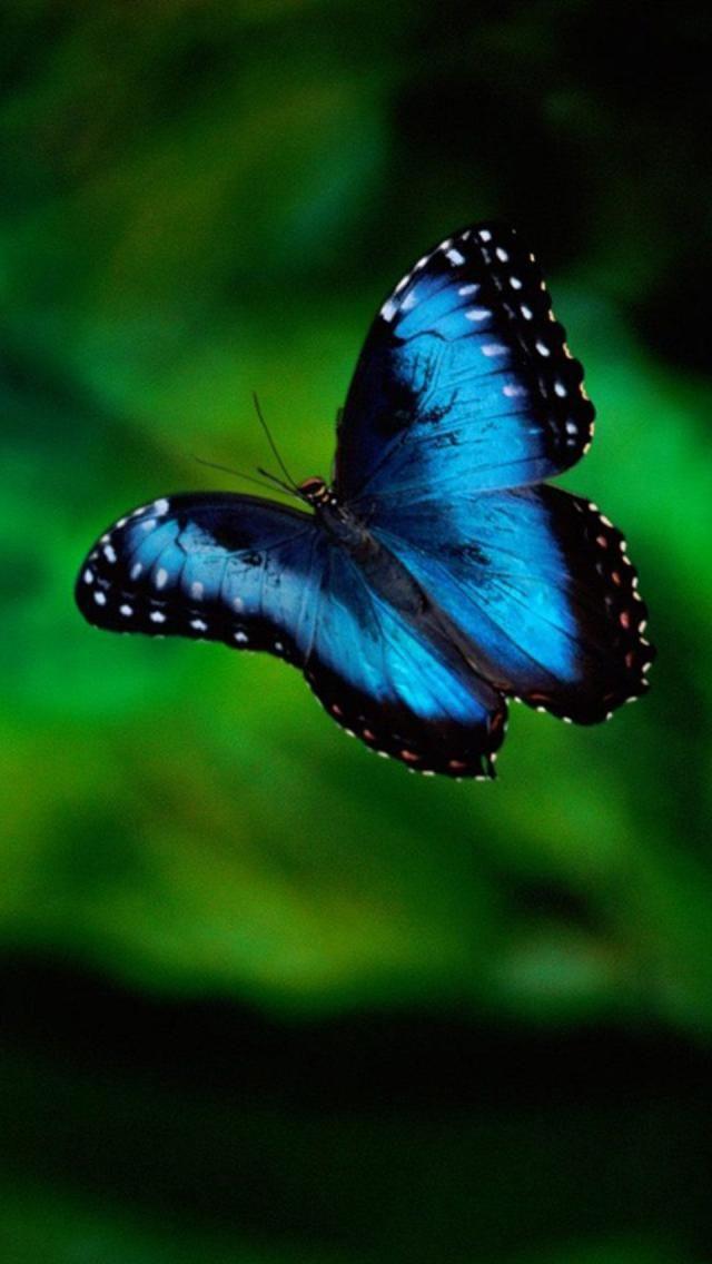 Flight blue butterfly #getinsync #butterfly