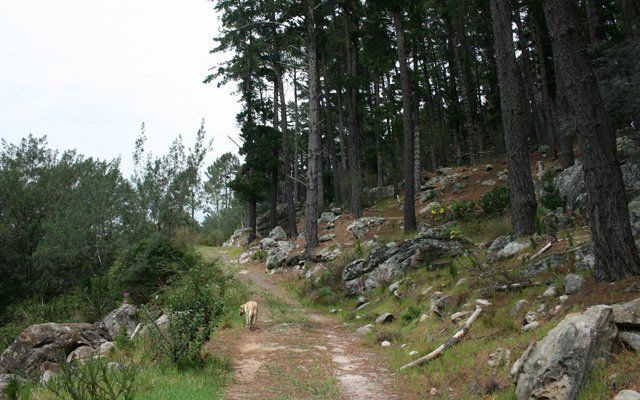 Hikes in Cape Town and Surrounds   Walking and Hiking in the Western Cape