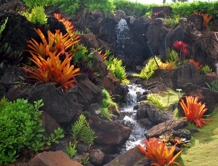 Water feature, bromeliads, ti leaves, ferns...