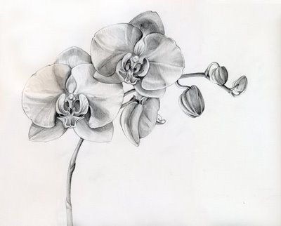 Orchid: Rare beauty, love, refinement, beautiful lady, Chinese symbol for many children, mature charm, beauty, long life. I want this tattoo soooo bad :)