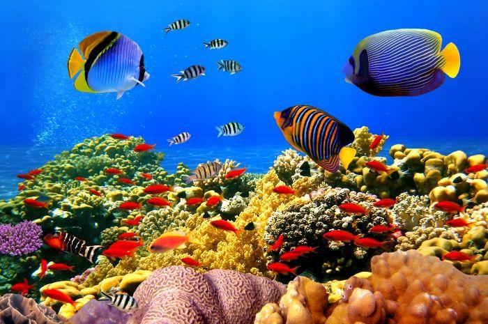 Обои на рабочий стол Животные:Тропические, Рыбки, Кораллы - скачать бесплатно. | Обои-на-стол.com