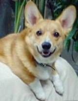 Dog Pink Eye (Dog Conjunctivitis) Natural RemediesKathy Gregersen
