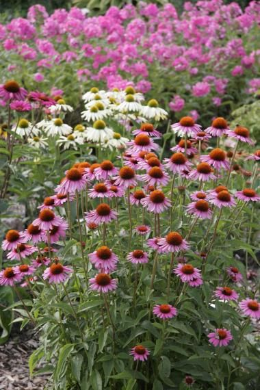 ehrfurchtiges typische herbstblumen und graser die den garten der kuhleren saison schmucken spektakuläre Bild der Bdfdcbbdbaf Garden Projects Dream Garden Jpg
