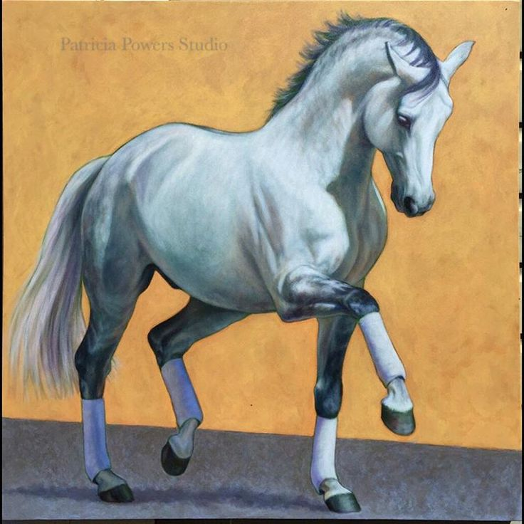 """""""Renaissance Tyme"""" will be going with me to #Dressage at Devon this week. 3x3' oil on canvas.  #horsesinart #warmblood #horses #horsesofinstagram #dressur #pferd"""