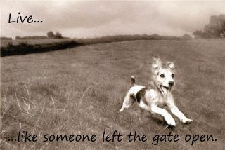 I love this little dogs philosophy!!