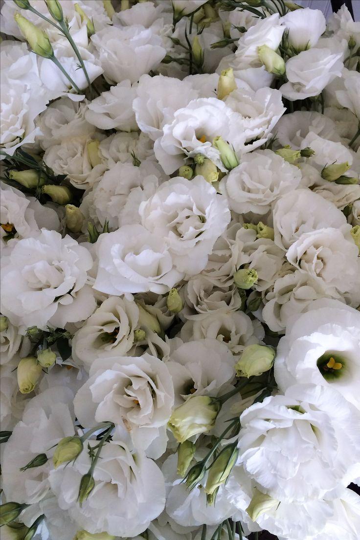 Five Tricks to Growing Fantastic Field Lisianthus - Love 'n Fresh Flowers