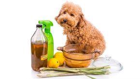 5 remedios naturales para combatir pulgas y garrapatas