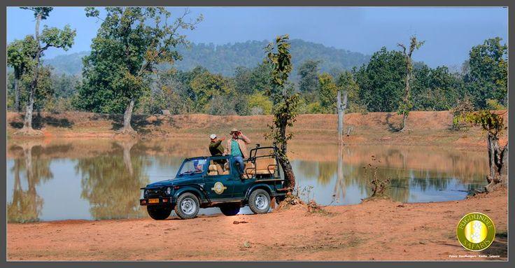 Jeep Safari at Panna National Park
