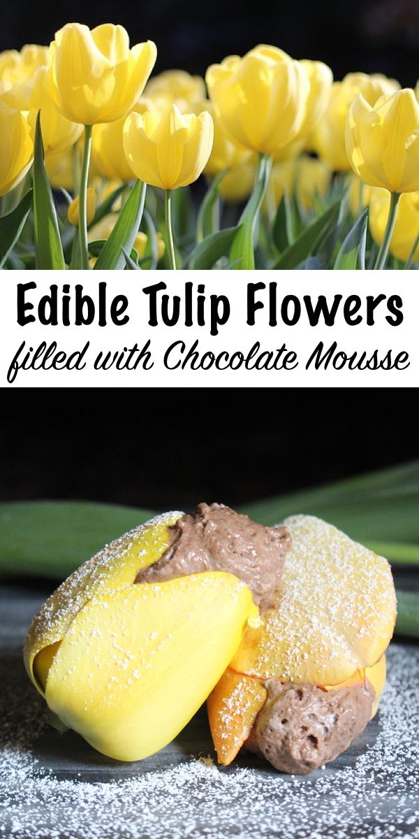 Edible Tulips With Chocolate Mousse Recipe Edible Chocolate Mousse Real Food Recipes