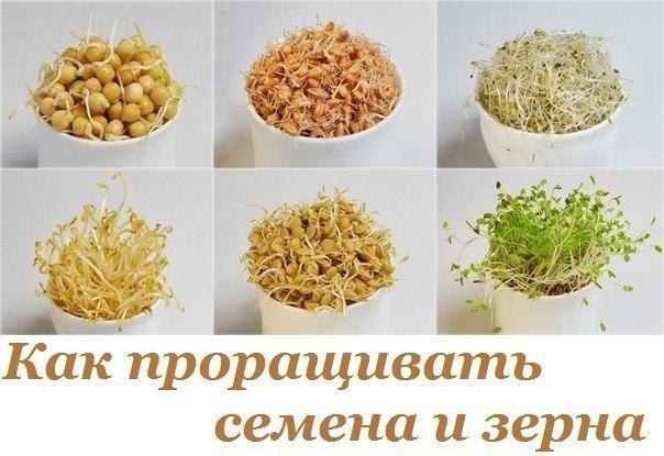 Как проращивать семена и зерна: сохрани их энергетический потенциал для своего…