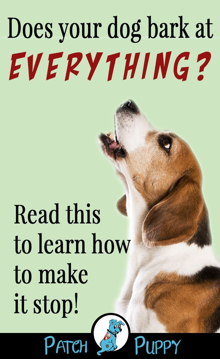 How To Control Excessive Barking Train Your Dog Not To Bark