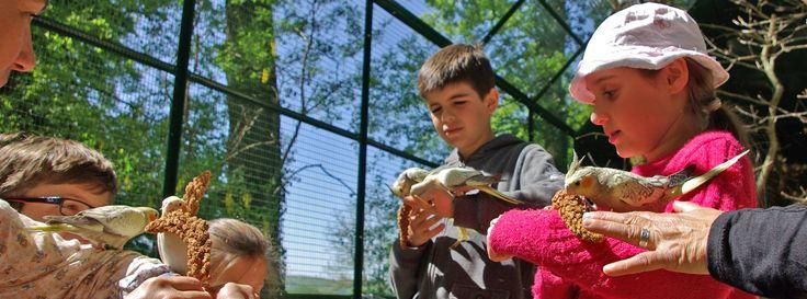 Activities for children - Château des Milandes