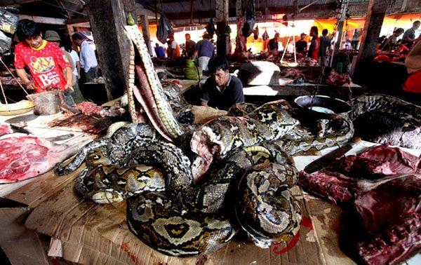 Pasar Ekstrem Tomohon Tempatnya Pecinta Kuliner  Ular, Tikus hutan, Anjing, Kucing, Kelelewar, Biawak dan Babi hutan