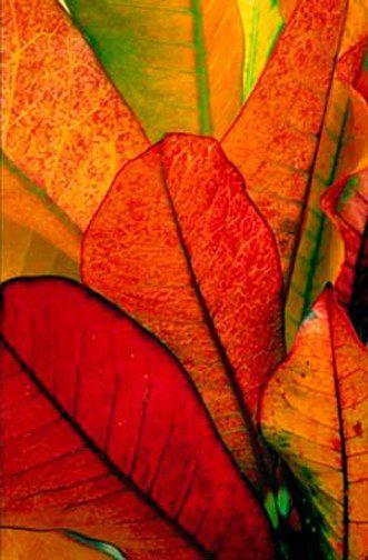 Leaves 에이플러스카지노 here777.com 윈스카지노