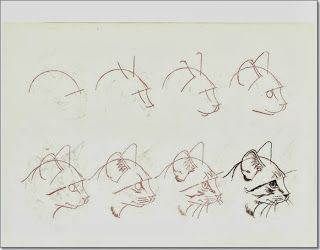 How to draw cats.