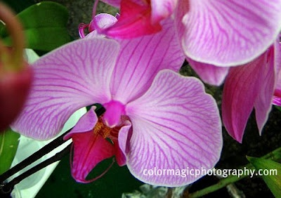 : Orchids, Gardens