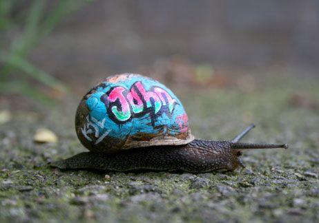 The Art of Streetart: Street Artists, Shells, Little People, Snails Art, Cities, Graffiti, Art Projects, Snails Mail, Streetart