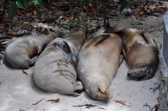 pino l - Galapagos -  Recensioni dell'utente - TripAdvisor