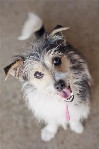 Hi, I am Fiona! Unfortunately I have never had a stable home or family so far in my short life, so I hope my next one will be my furever home! I am a happy and excitable dog that just needs some extra training. I respond really well to treats. I need a commited owner who will give me some stability. If you have a secure property to keep me safe that would be grand! I'm at the Toowoomba Adoption Centre. Please come and meet me #adoptapet #dog #rspcaqld #blackmagic
