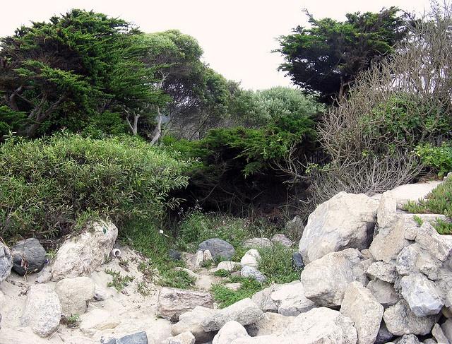 Hidden spot near Mirimar beach, Half Moon Bay
