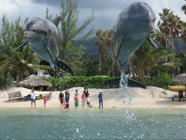 17 best images about dolphin cove jamaica on pinterest. Black Bedroom Furniture Sets. Home Design Ideas