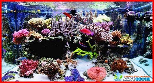 Bagaimana Cara Membuat Akuarium Air Laut  Bagaimana cara membuat akuarium air laut adalah merupakan hal yang sangat wajar bagi anda yang mungkin baru saja ingin menggeluti hal atau hobi baru ini. Hal yang tidak terlalu sulit sebenarnya jika anda lebih telaten, namun akan bisa gagal apabila kurangnya perhatian dari anda.  Selengkapnya: http://akvodecor.com/bagaimana-cara-membuat-akuarium-air-laut/