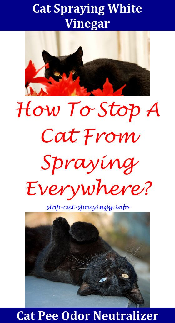 Cat Spray Hilarious Male cat spraying, Cat pee, Cat pee