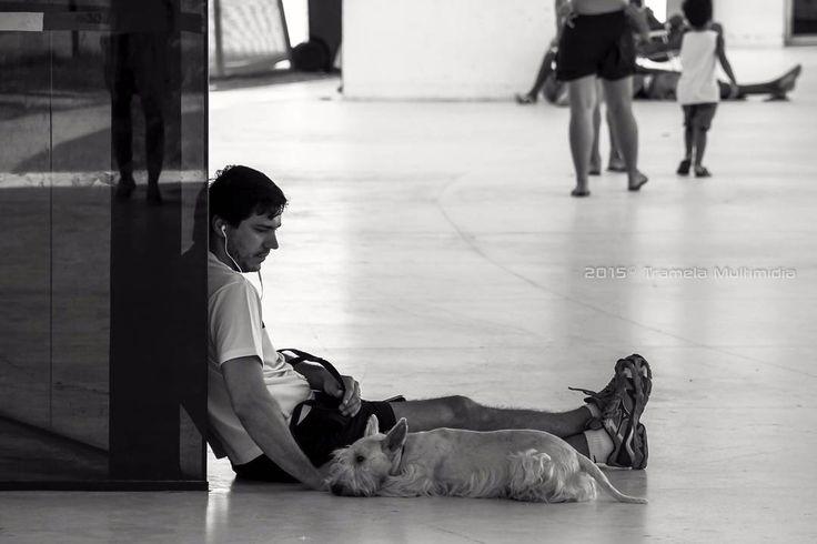 """""""Se um cachorro fosse seu professor você aprenderia habilidades assim: - Quando alguém que você ama chegar em casa corra ao seu encontro; - Não morda se um rosnado resolver a situação; - Não importa quantas vezes o outro magoar você volte e faça as pazes."""" #tramelamultimídia #vamostramelar #cão #dog #vscorecife #vscobrasil #vscocam #vsco  #vscogood #vscogrid #carpediem #goodvibes #boasvibrações #inspiration #inspiração #happy #hapiness #boanoite #goodnight #regram#photo#fotografia…"""