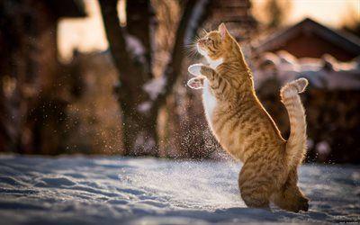 Scarica sfondi giorno d'inverno, gatto rosso, salto