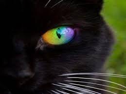 Resultado de imagen de gatos negros