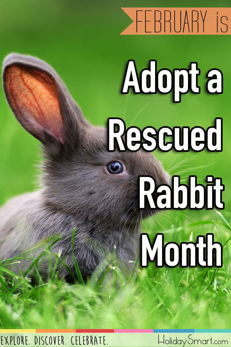 February is Adopt a Rescued Rabbit Month Adoption, Cat