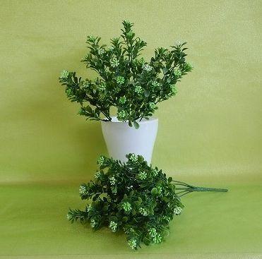 Самшит цветущий куст Н=30 см Цена: 40,00 грн. Код 1156ИЗ_фото